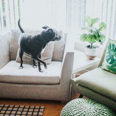 Diese Zimmerpflanzen sind giftig für Haustiere