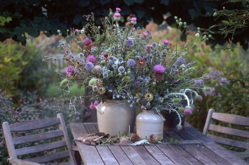 Disteln in der Vase