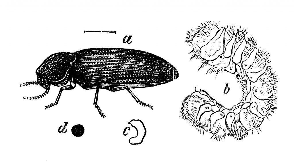 Holzwürmer sollte man schnell bekämpfen, sonst bleibt am Ende nur noch morsches Holz.