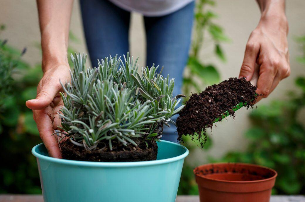 Wann und wie man Zimmerpflanzen richtig umtopfen sollte