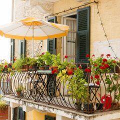 Auch Pflanzen fühlen sich unter Sonnenschirmen wohl und brauchen Schutz vor der Sonne