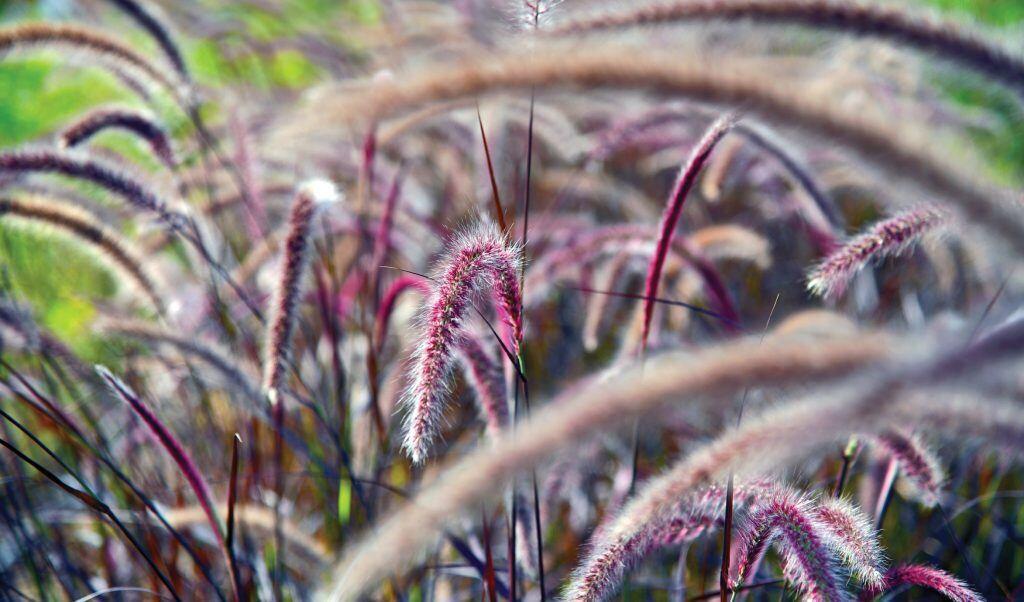 Warum man Gräser im Garten pflanzen sollte