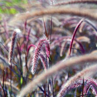 Warum man Gräser im Garten anpflanzen sollte