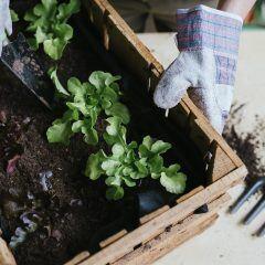 Welches Gemüse und welche Pflanzen Sie im August anpflanzen können