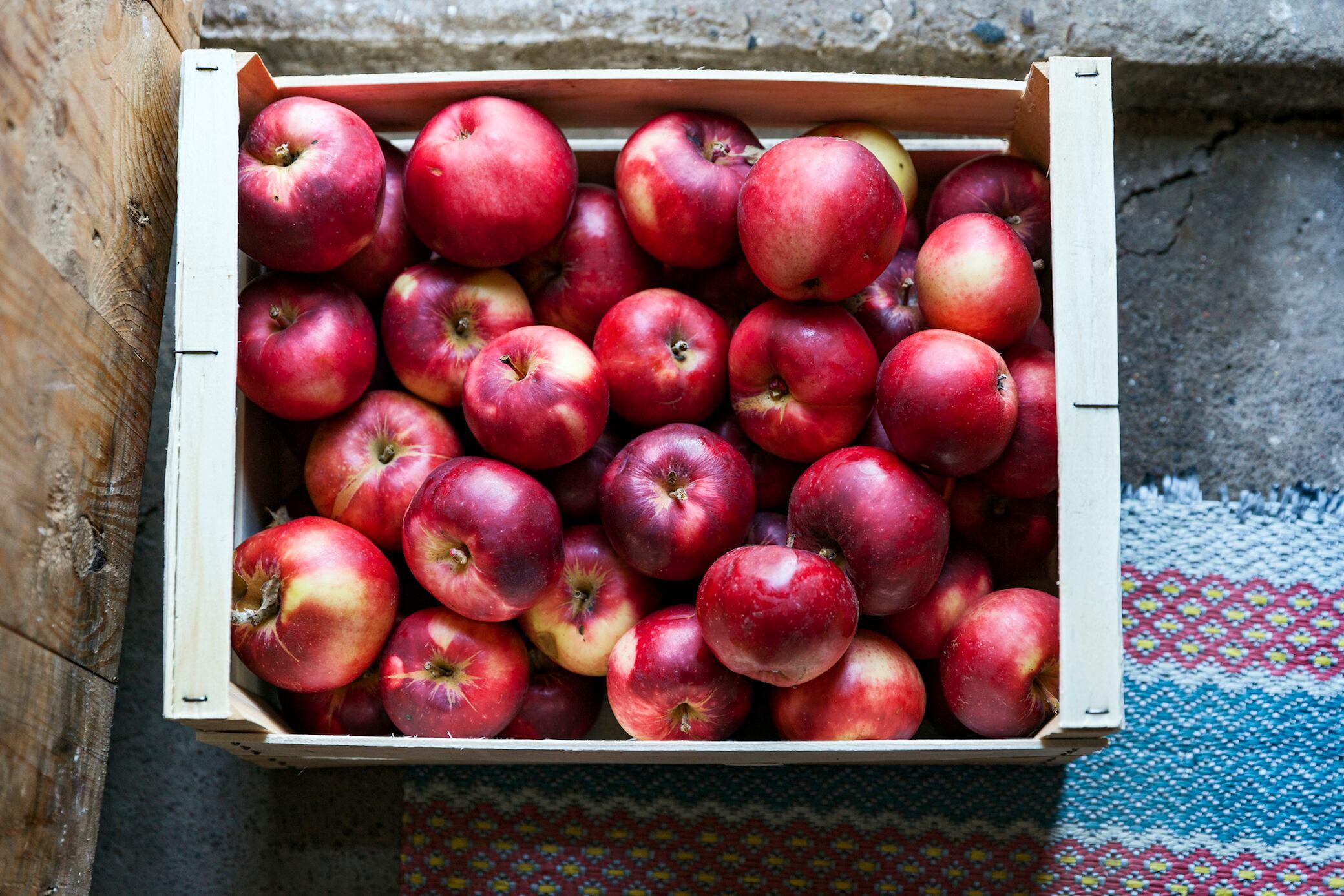 So lagern Sie Äpfel richtig
