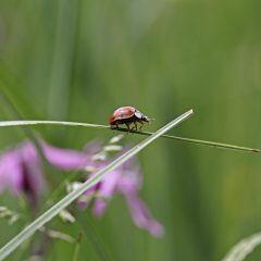 Der Nabu bittet um Mithilfe. Per App oder Online-Formular Insekten zählen.