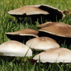 Entfernen oder stehen lassen: Was tun bei Pilzen im Garten?