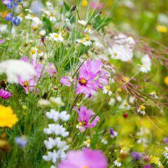 Mit diesen Zwiebeln und Samen sorgen Sie im Herbst für ein buntes Frühlingsbeet