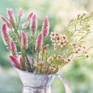 Warum man Bio-Blumen ohne Pestizide kaufen sollte