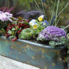 Die schönsten Herbstpflanzen für Balkon und Garten