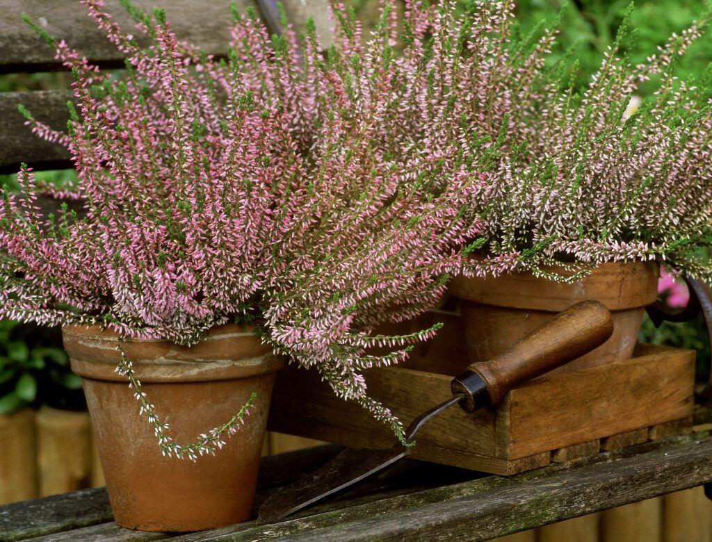 Herbstpflanzen für Blumenkübel