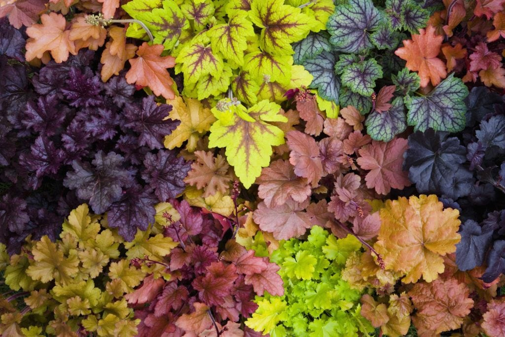 Blattschmuckpflanzen im Herbst säen