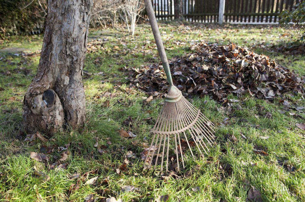 Diese Gartenarbeiten stehen im Oktober an