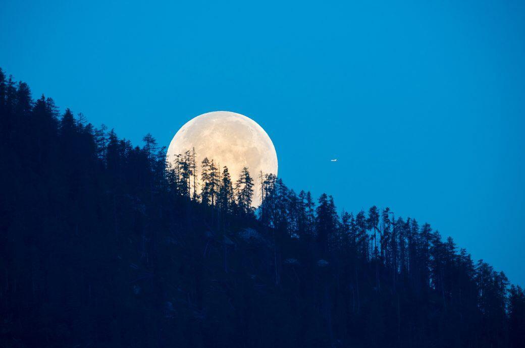 Der Mond soll bestimmte Eigenschaften von Holz beeinflussen. Was steckt dahinter?