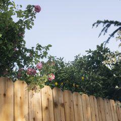 Bäume an der Grundstücksgrenze – das ist die Rechtslage