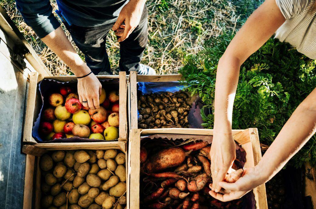 Obst und Gemüse online tauschen und verkaufen
