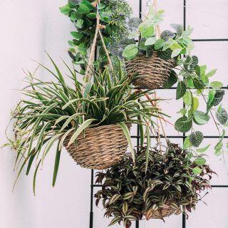Pflanzen hängen von der Decke