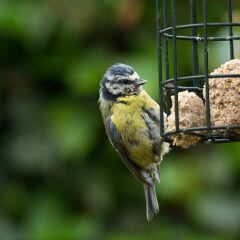 Wann man Vögel nicht auf dem Balkon füttern darf
