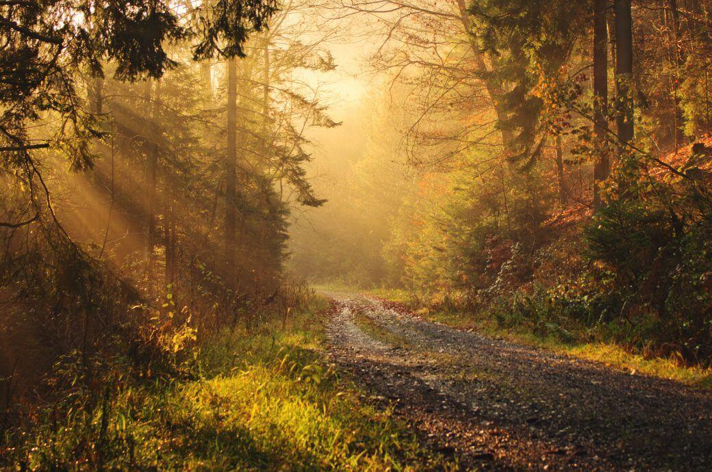Eine Waldlichtung im Herbst