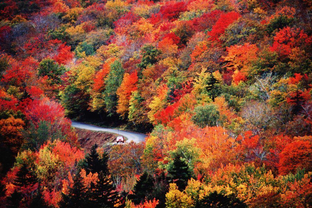 Gefärbtes Herbstlaub an Bäumen