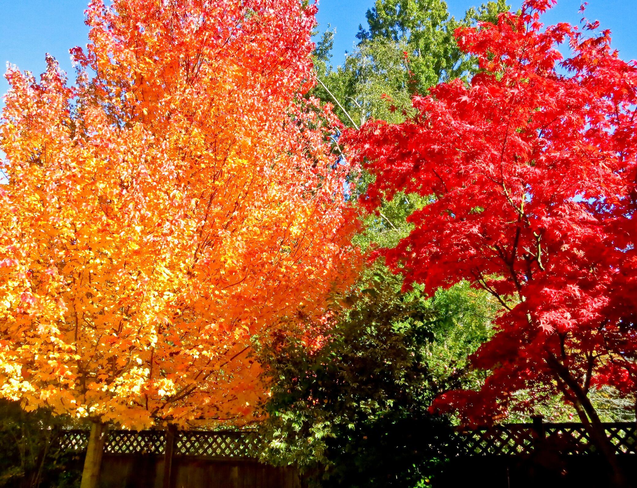 """Diese Pflanzen bringen den """"Indian Summer"""" in Ihren Garten"""