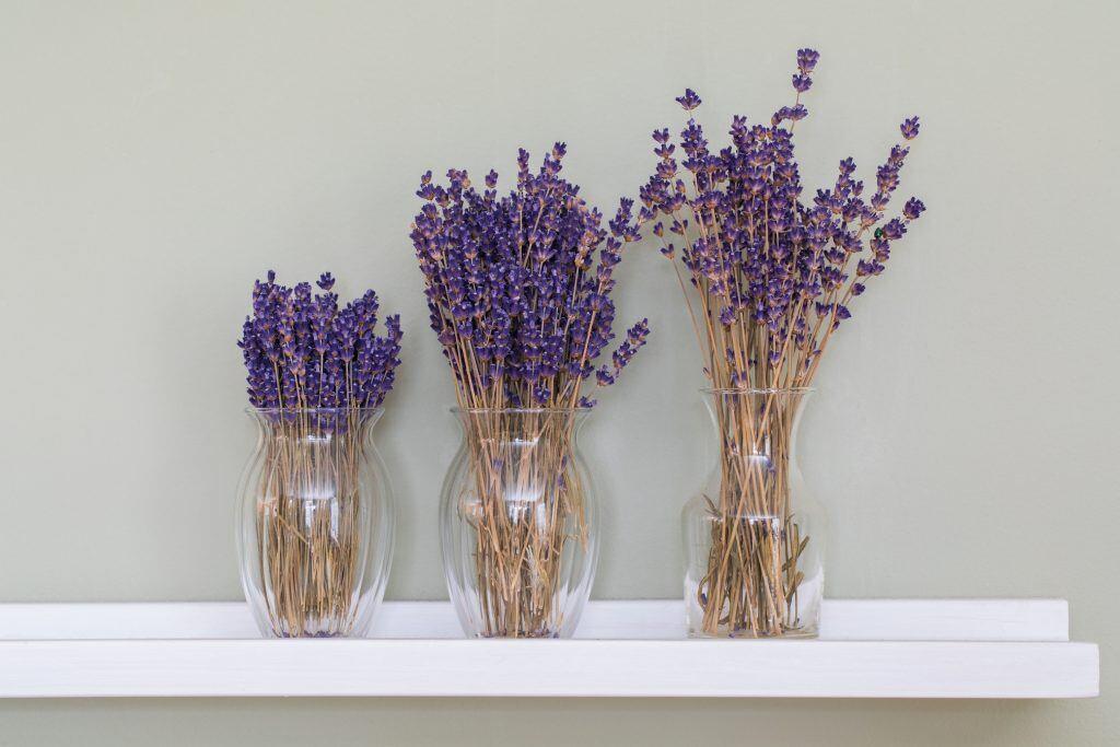 Getrockneter Lavendel für zu Hause