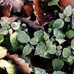 Tipps für Frostschutz bei Pflanzen
