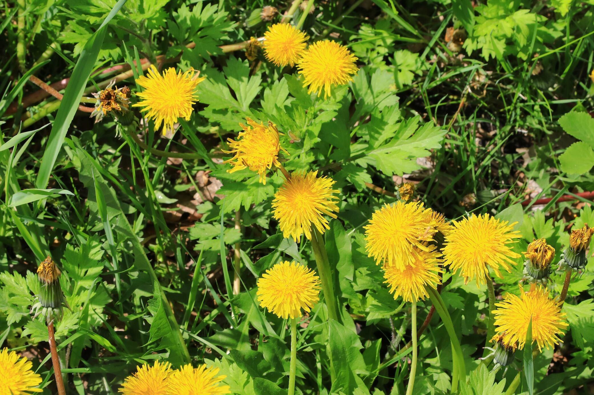 Rasen im Herbst vor Unkraut und Moos schützen