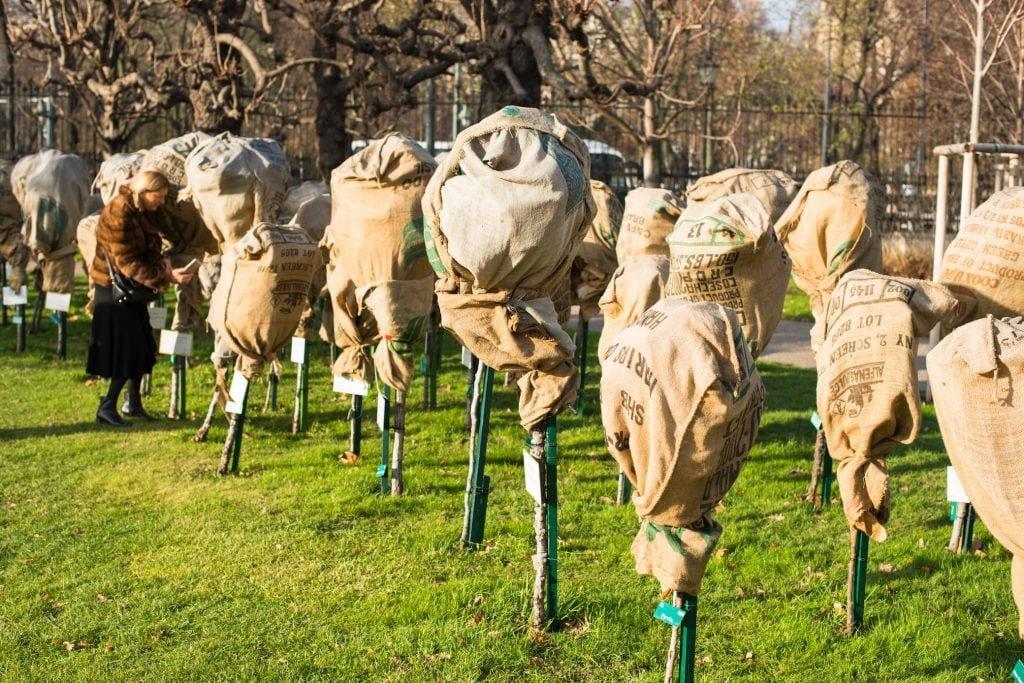 Mit Jutesäcken Pflanzen vor dem Winter schützen