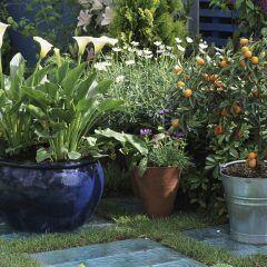 Kübelpflanzen überwintern: Wann man sie ins Haus holen sollte
