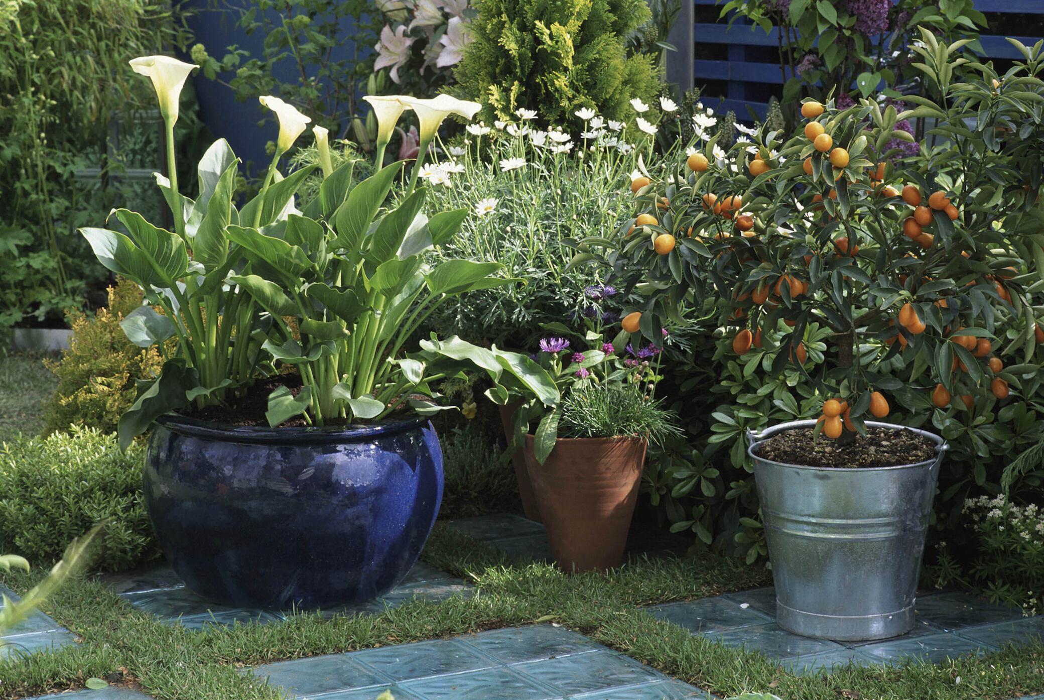 Wann Sie Kübelpflanzen aus dem Garten ins Haus holen sollten