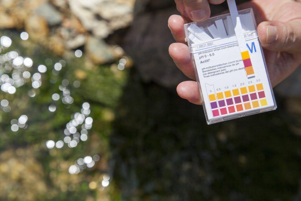 Bevor Sie den Garten kalken, sollten Sie den pH-Wert mithilfe einer Bodenanalyse herausfinden