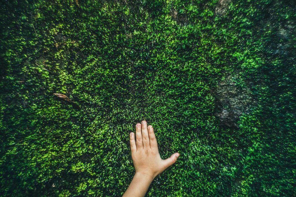 Für wen sich Moosrasen im Garten lohnt