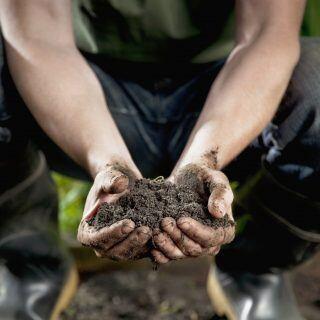Torffreie Erde: Ein Mann hält in seinen Händen einen Haufen Gartenerde