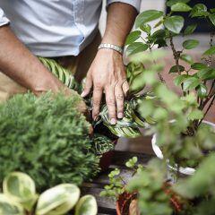 Wie man Zimmerpflanzen im Winter pflegen sollte