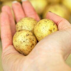 Lifehack: Kann man mit Kartoffeln wirklich sauber machen?