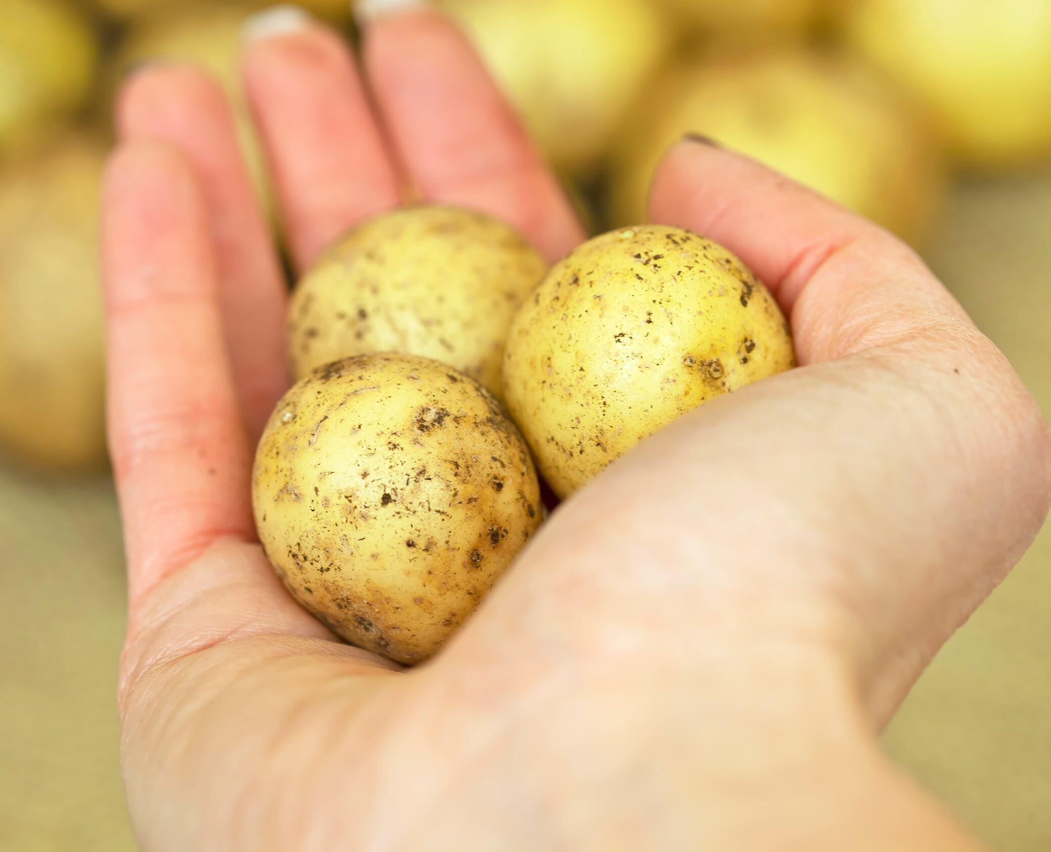 Life-Hacks mit Kartoffeln – helfen sie wirklich beim Putzen?