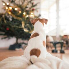 Worauf Haustierbesitzer bei Weihnachten achten müssen, um es tiersicher zu gestalten