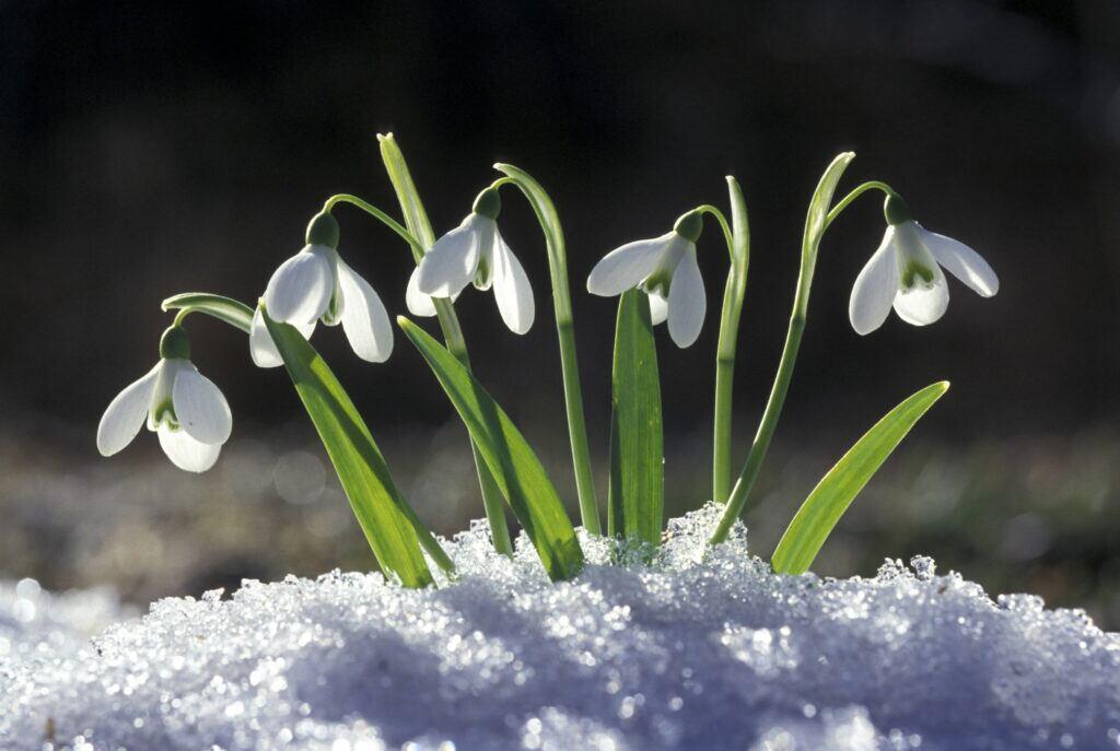 Natur-Kalender: