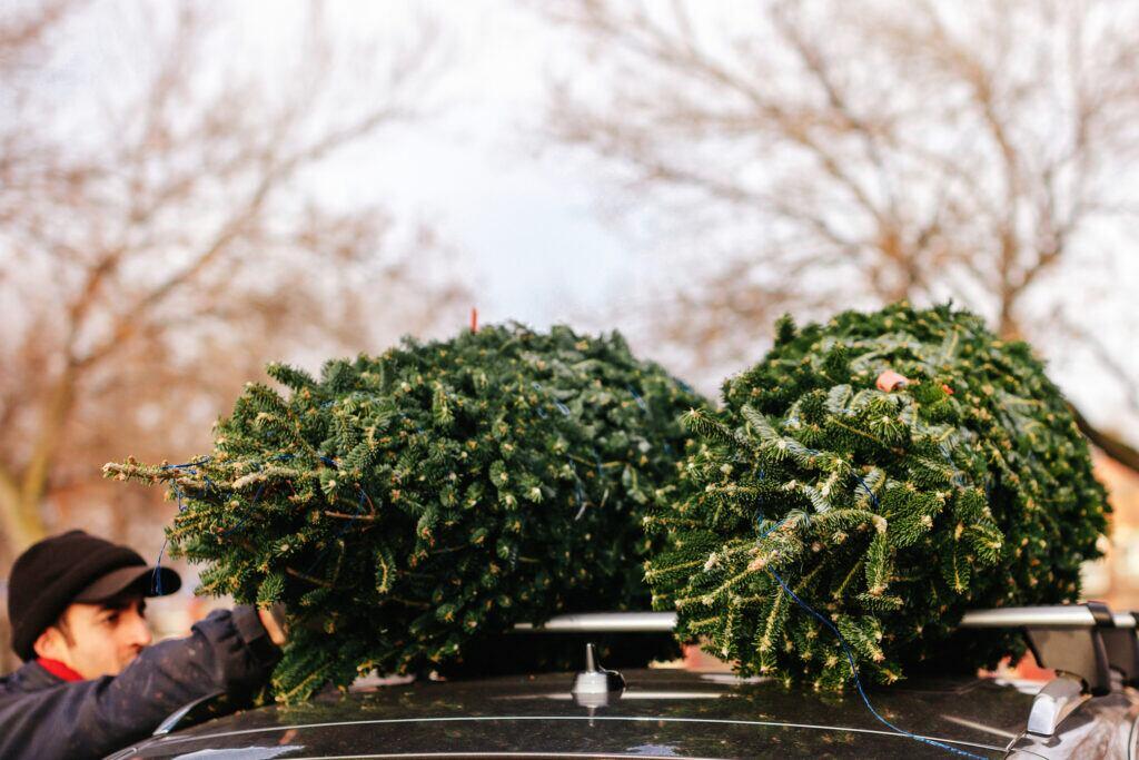 Ein Mann verstaut zwei Weihnachtsbäume auf dem Dach eines Autos.