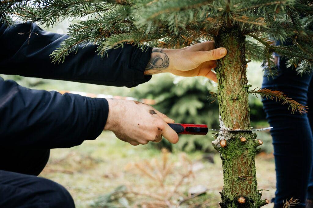 Mann sägt einen Weihnachtsbaum ab.