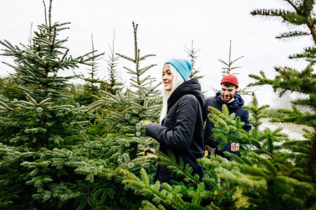 Eine junge Frau und ein junger Mann stehen zwischen Tannnenbäumen und schauen sich die Bäume an.