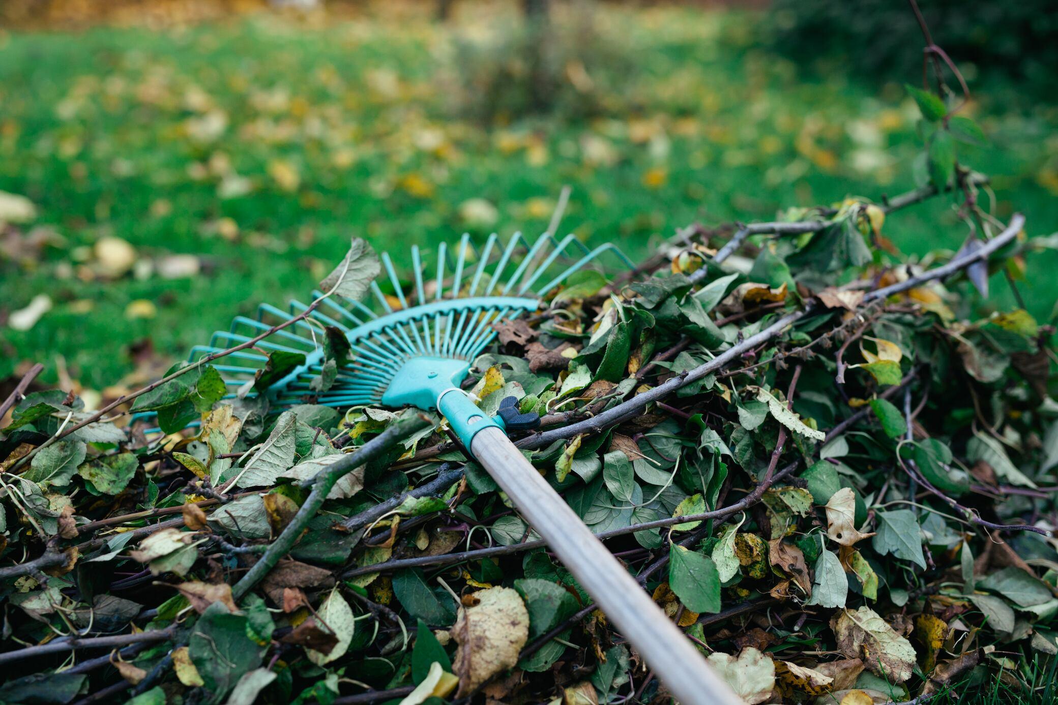 Das gibt es im November im Garten zu tun