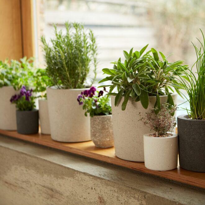 Muss man Zimmerpflanzen von der Fensterbank räumen, wenn man lüften will?