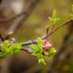 Bauernregel-Check: Was bedeuten blühende Bäume im November?