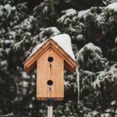 Nistkästen und Vogelhäuser im Winter nicht leeren