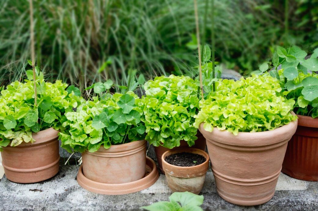 Kübelpflanzen sind im Winter anfällig für Schädlinge