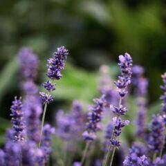 Warum haben Pflanzen verschiedene Namen?