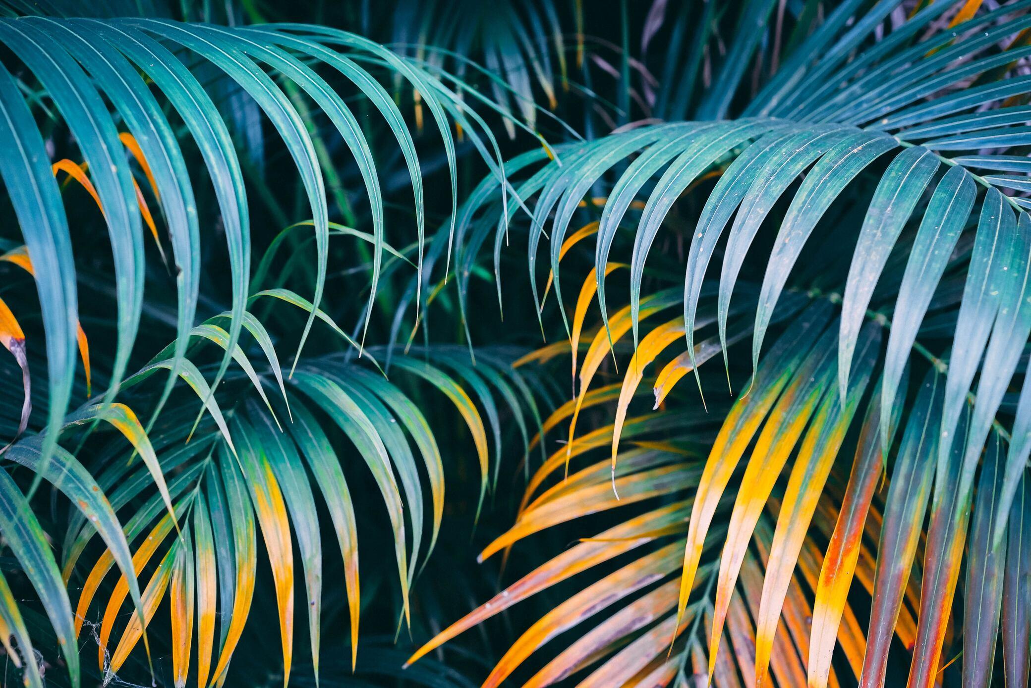 Mit Tapeten das Dschungel-Flair nach Hause holen
