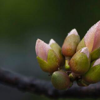 Was bedeutet ein milder Winter für Pflanzen und Bäume?